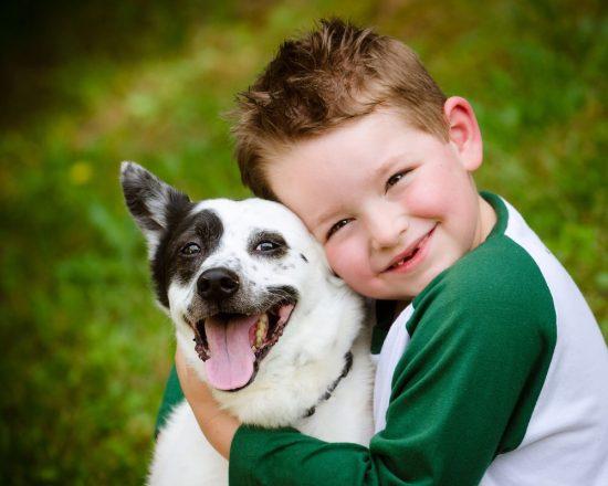 Memelihara serta merawat hewan