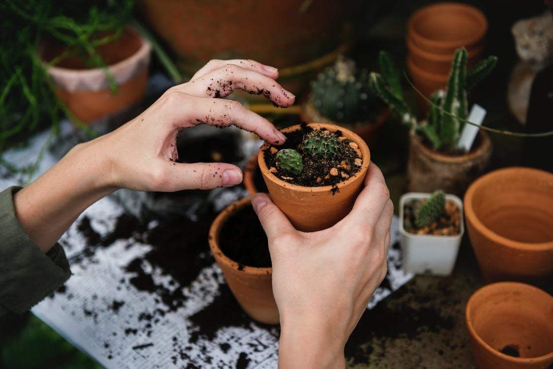 Peralatan kebersihan atau berkebun